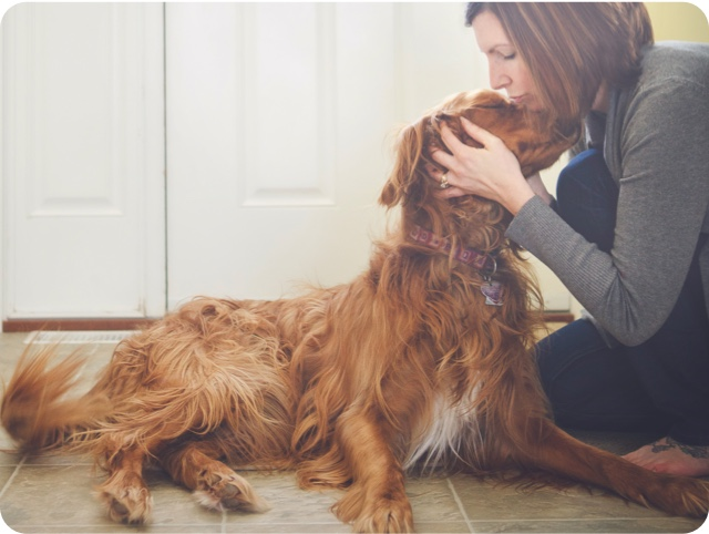 Person kissing brown dog